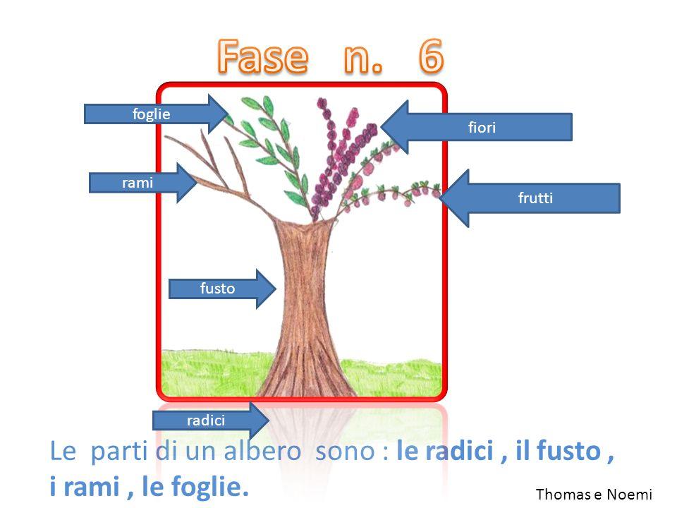 Le parti di un albero sono : le radici, il fusto, i rami, le foglie. fiori foglie rami frutti fusto radici Thomas e Noemi
