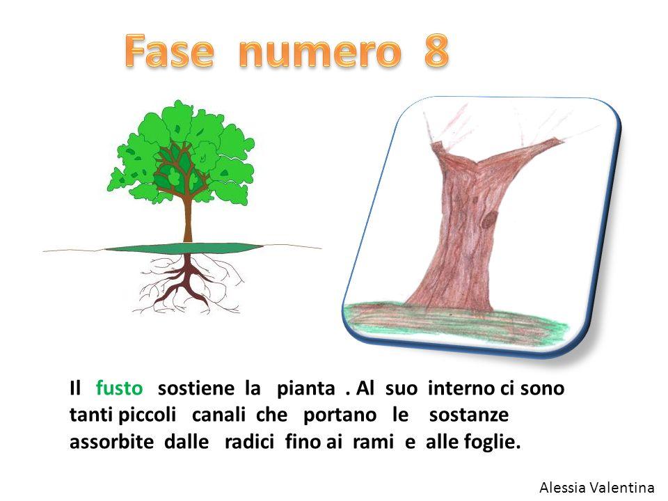 Il fusto sostiene la pianta. Al suo interno ci sono tanti piccoli canali che portano le sostanze assorbite dalle radici fino ai rami e alle foglie. Al
