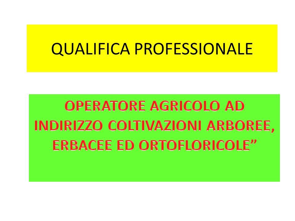 QUALIFICA PROFESSIONALE