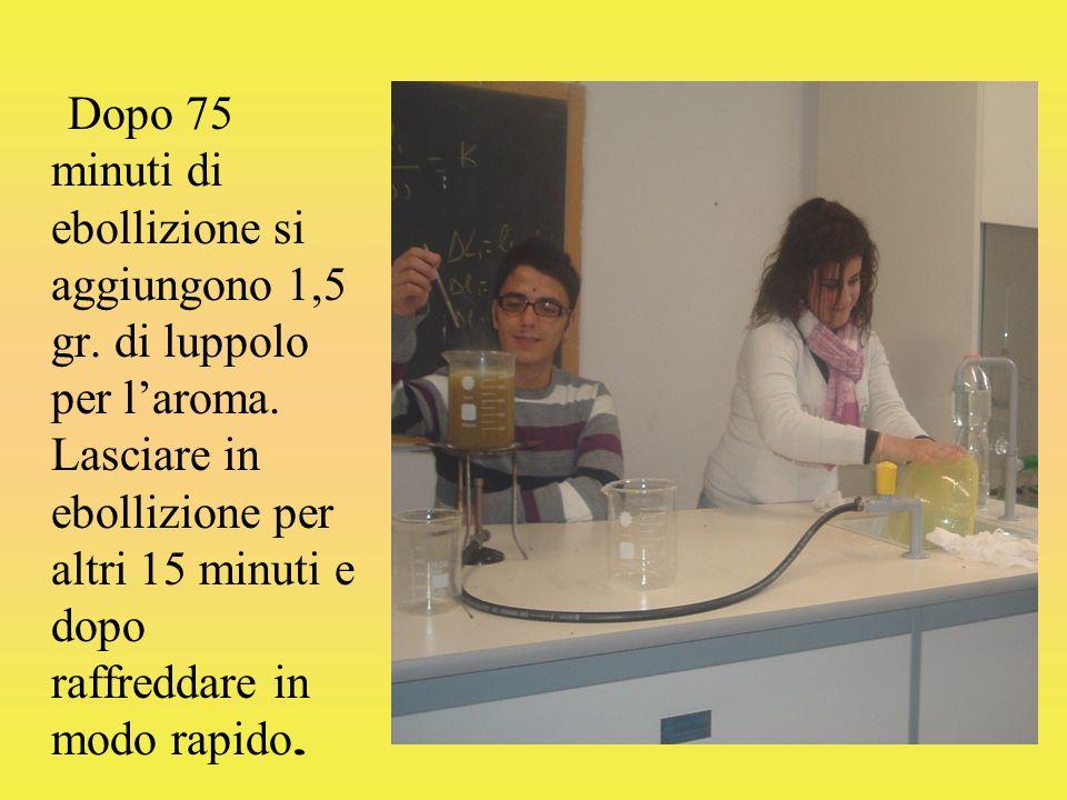 Dopo 75 minuti di ebollizione si aggiungono 1,5 gr. di luppolo per laroma. Lasciare in ebollizione per altri 15 minuti e dopo raffreddare in modo rapi