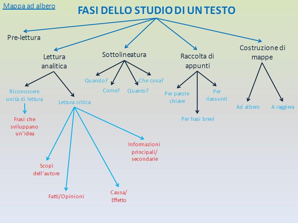 2) Le mappe concettuali Sono state realizzate dagli allievi mappe concettuali ad albero e a raggiera.