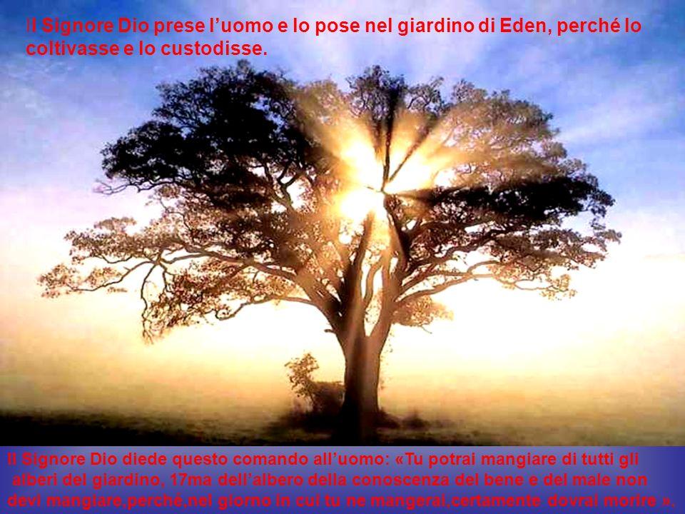 Il Signore Dio prese l uomo e lo pose nel giardino di Eden, perch é lo coltivasse e lo custodisse. Il Signore Dio diede questo comando alluomo: «Tu po