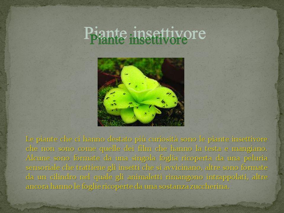 Ad est si trovano le piante tipiche del deserto cioè le piante grasse.