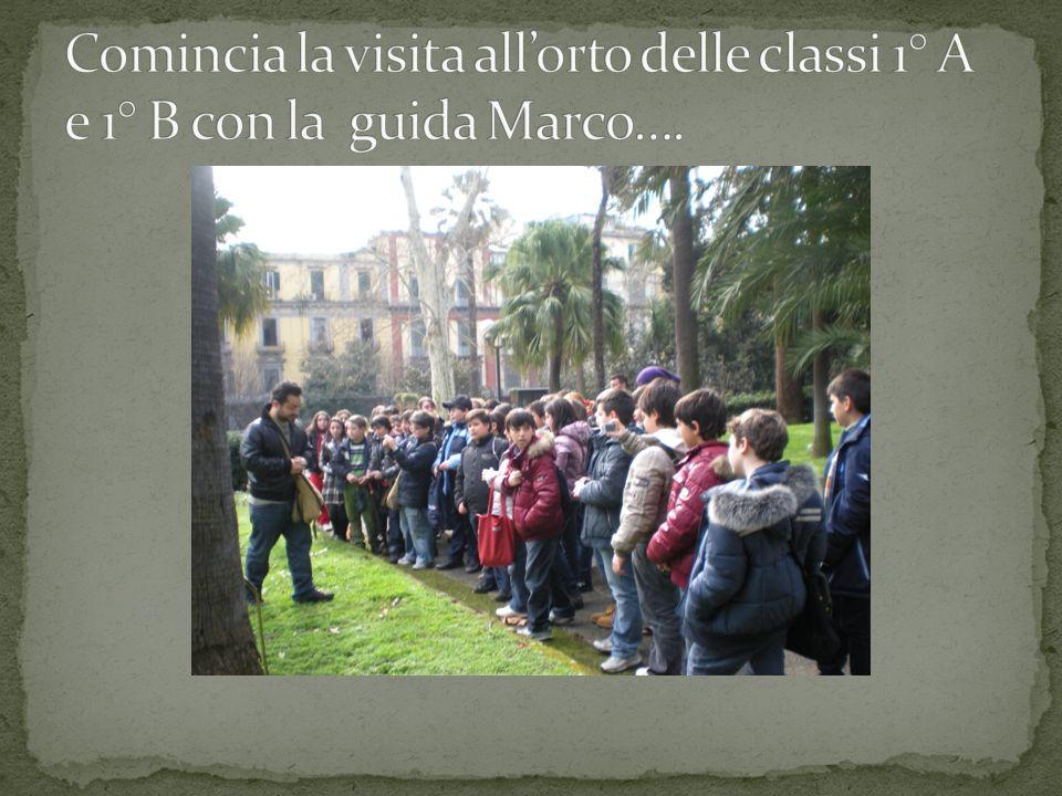 Mercoledì 03 Marzo 2010 la classe 1 A accompagnati dalla Prof.