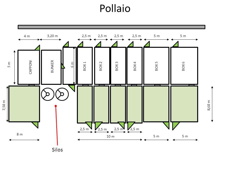 2,5 m 10 m 8 m BUNKERBOX 1BOX 2BOX 3BOX 4BOX 5BOX 6 4 m 5 m6 m 2,5 m3,20 m2,5 m 5 m 8,60 m CAPPONI 5 m 2,5 m 7,50 m Silos Pollaio