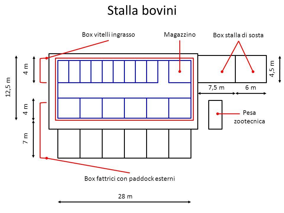 Stalla bovini Box vitelli ingrasso Box fattrici con paddock esterni Box stalla di sosta Pesa zootecnica 28 m 12,5 m 7 m 4 m Magazzino 7,5 m 6 m 4,5 m