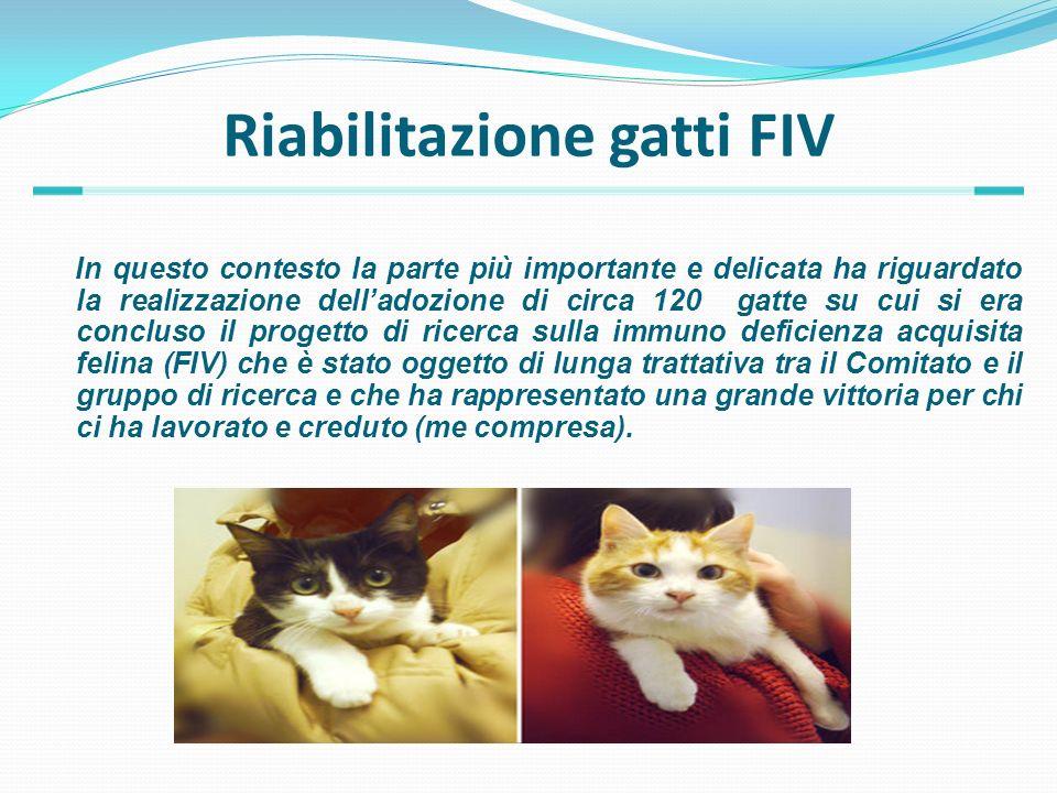 Riabilitazione gatti FIV In questo contesto la parte più importante e delicata ha riguardato la realizzazione delladozione di circa 120 gatte su cui s