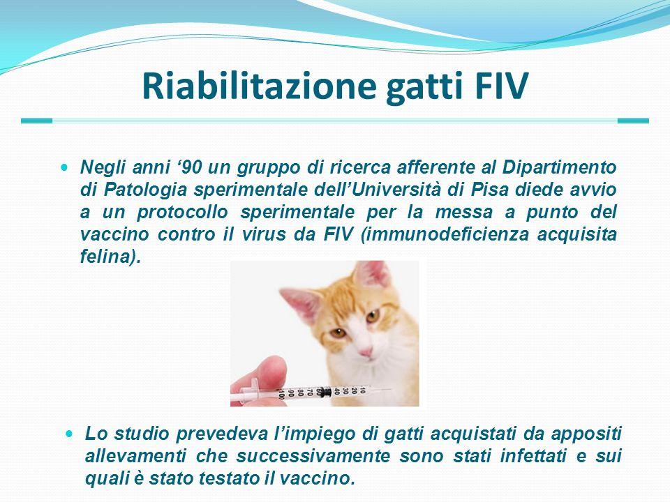Riabilitazione gatti FIV Negli anni 90 un gruppo di ricerca afferente al Dipartimento di Patologia sperimentale dellUniversità di Pisa diede avvio a u