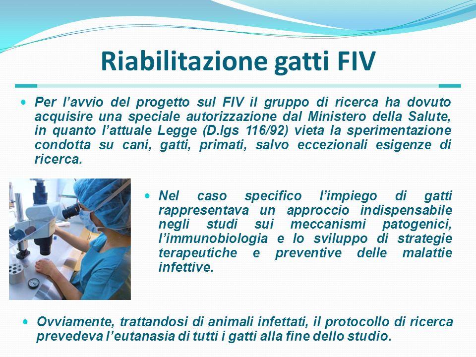 Riabilitazione gatti FIV Per lavvio del progetto sul FIV il gruppo di ricerca ha dovuto acquisire una speciale autorizzazione dal Ministero della Salu
