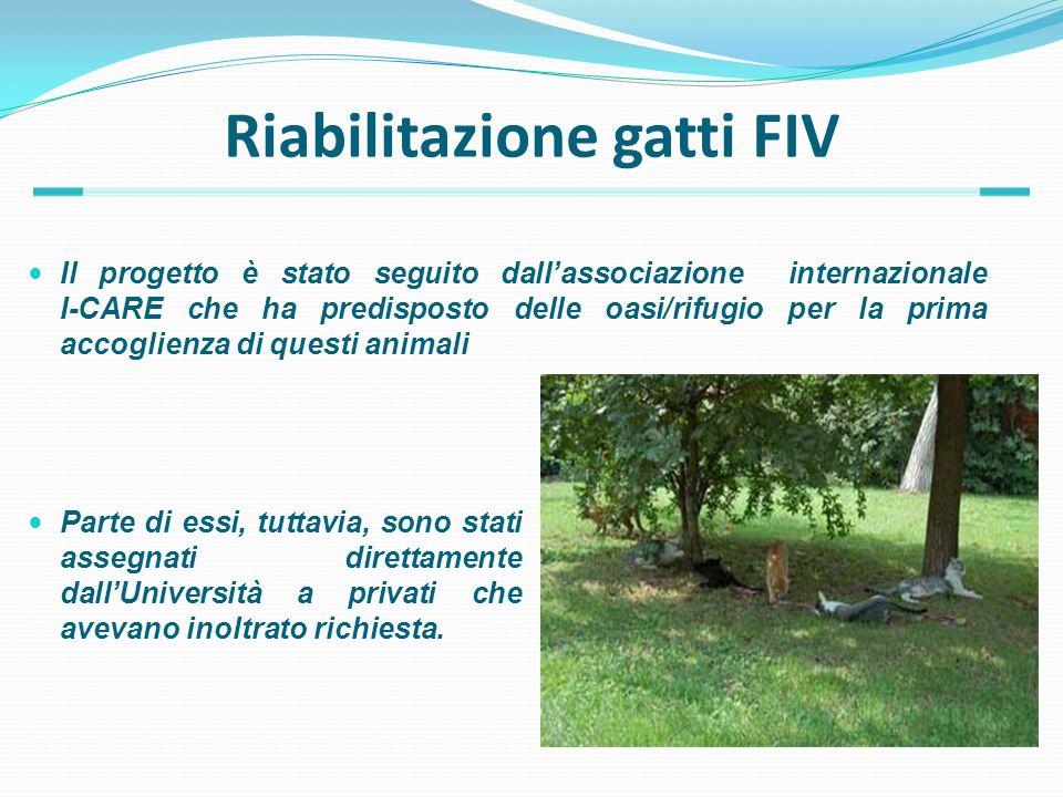Riabilitazione gatti FIV Il progetto è stato seguito dallassociazione internazionale I-CARE che ha predisposto delle oasi/rifugio per la prima accogli