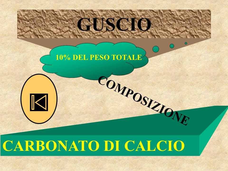 GUSCIO CARBONATO DI CALCIO 10% DEL PESO TOTALE COMPOSIZIONE