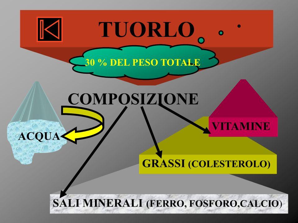 SALI MINERALI (FERRO, FOSFORO,CALCIO) GRASSI (COLESTEROLO) TUORLO 30 % DEL PESO TOTALE COMPOSIZIONE ACQUA VITAMINE