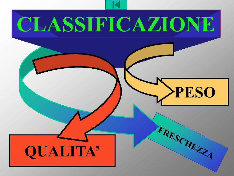FRESCHEZZA PESO QUALITA CLASSIFICAZIONE