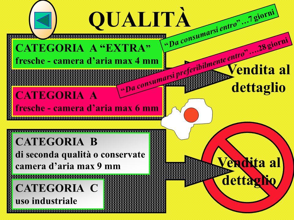CATEGORIA A fresche - camera daria max 6 mm QUALITÀ CATEGORIA B di seconda qualità o conservate camera daria max 9 mm CATEGORIA C uso industriale CATE