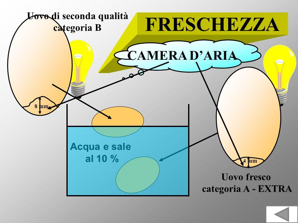 FRESCHEZZA Acqua e sale al 10 % CAMERA DARIA 4 mm 8 mm Uovo fresco categoria A - EXTRA Uovo di seconda qualità categoria B