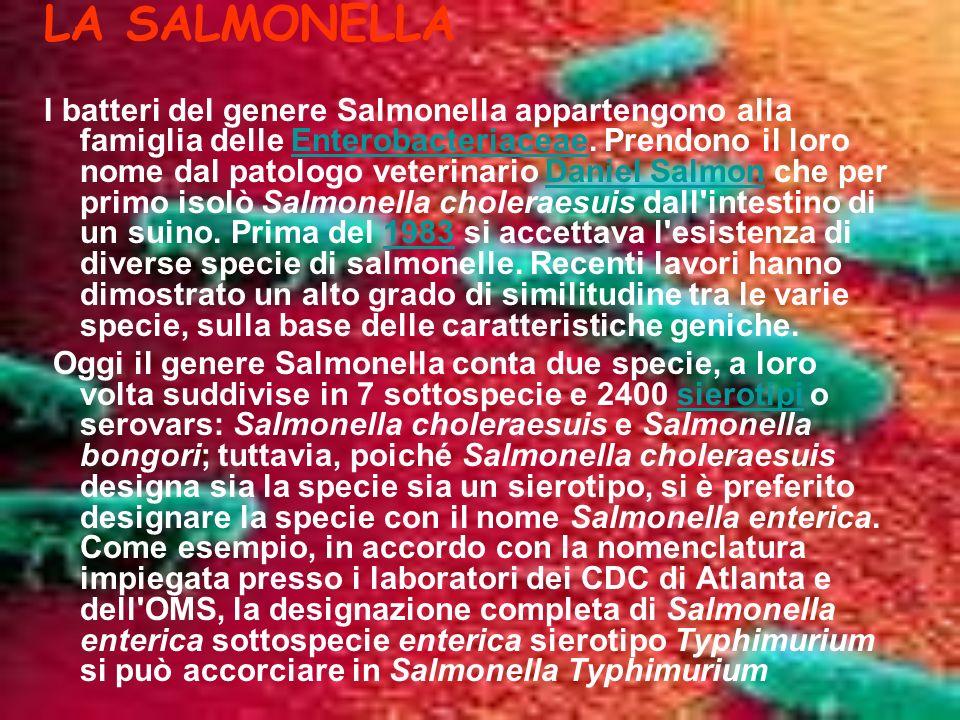 LA SALMONELLA I batteri del genere Salmonella appartengono alla famiglia delle Enterobacteriaceae.