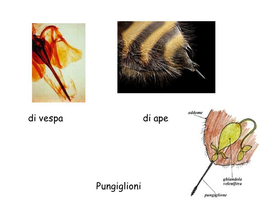 di vespa di ape Pungiglioni
