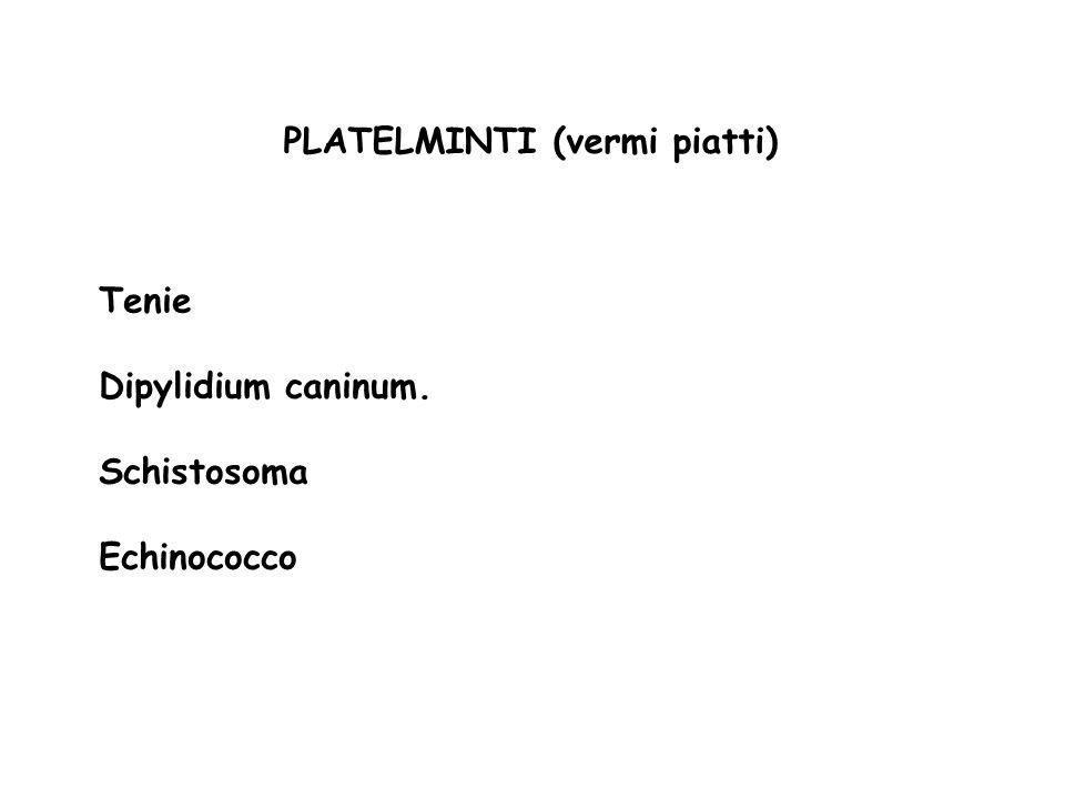 PLATELMINTI (vermi piatti) Tenie Dipylidium caninum. Schistosoma Echinococco