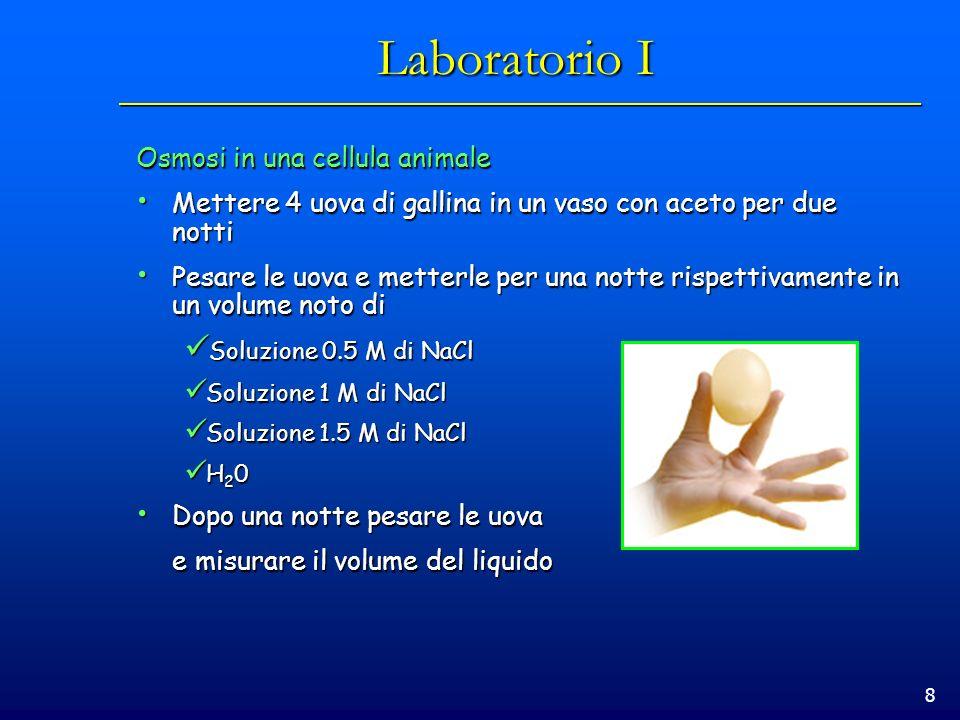 9 Laboratorio II Petalo di geranio in soluzione ipotonica Petalo di geranio in soluzione ipertonica 40X100X 40X in tempi successivi