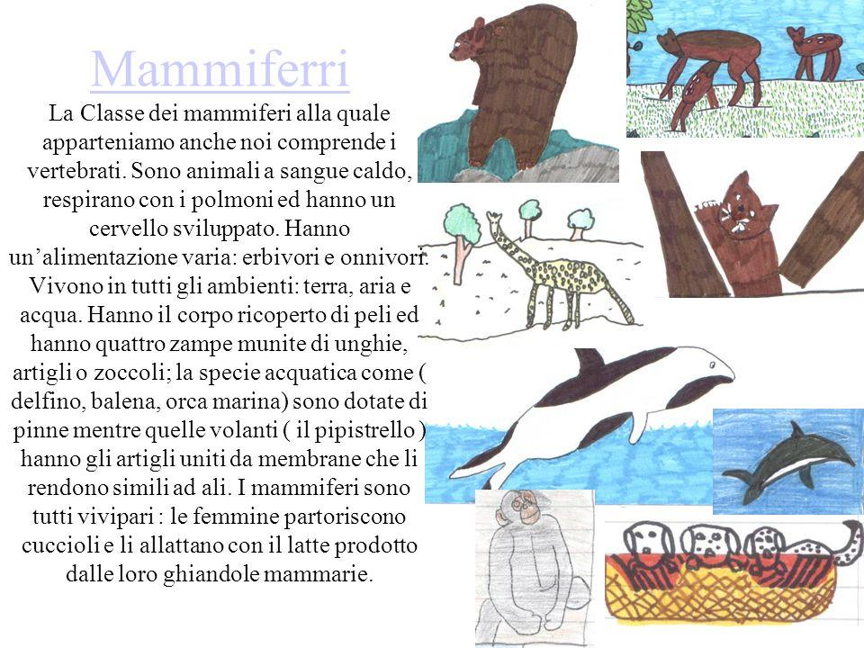 Mammiferri Mammiferri La Classe dei mammiferi alla quale apparteniamo anche noi comprende i vertebrati. Sono animali a sangue caldo, respirano con i p