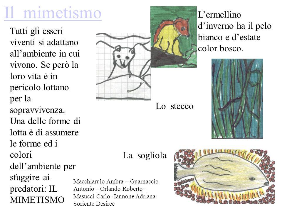 Il mimetismo Lermellino dinverno ha il pelo bianco e destate color bosco. Tutti gli esseri viventi si adattano allambiente in cui vivono. Se però la l