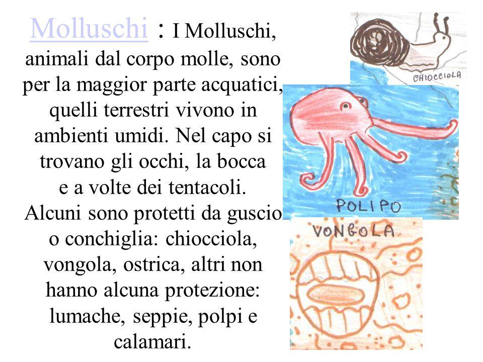 MolluschiMolluschi : I Molluschi, animali dal corpo molle, sono per la maggior parte acquatici, quelli terrestri vivono in ambienti umidi. Nel capo si