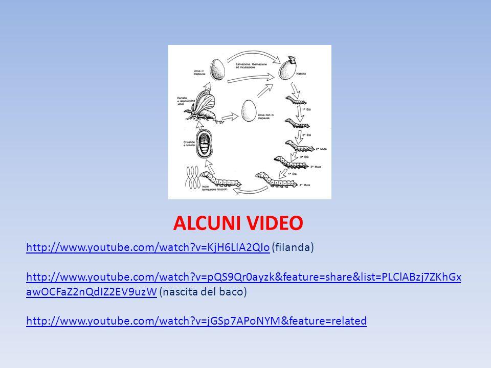 ALCUNI VIDEO http://www.youtube.com/watch?v=KjH6LlA2QIohttp://www.youtube.com/watch?v=KjH6LlA2QIo (filanda) http://www.youtube.com/watch?v=pQS9Qr0ayzk