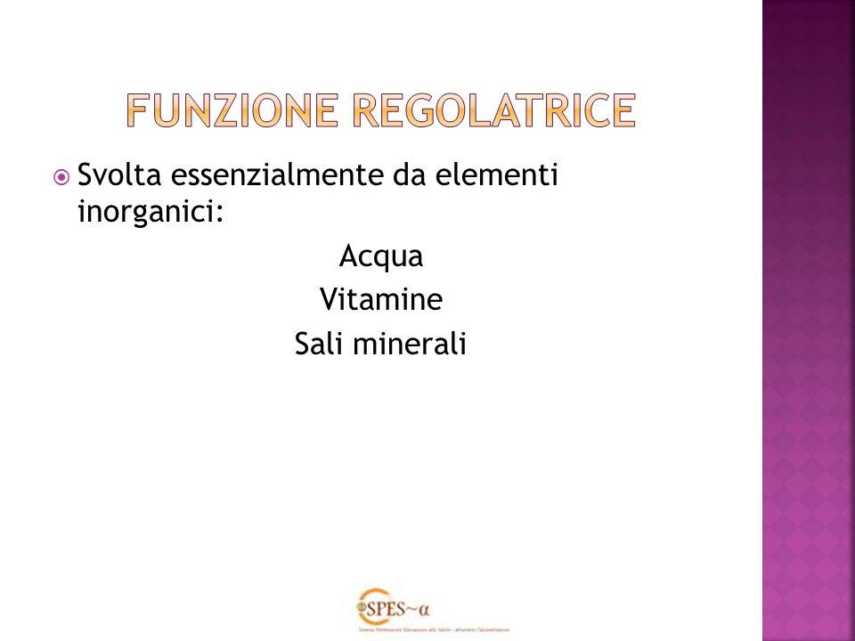 Svolta essenzialmente da elementi inorganici: Acqua Vitamine Sali minerali