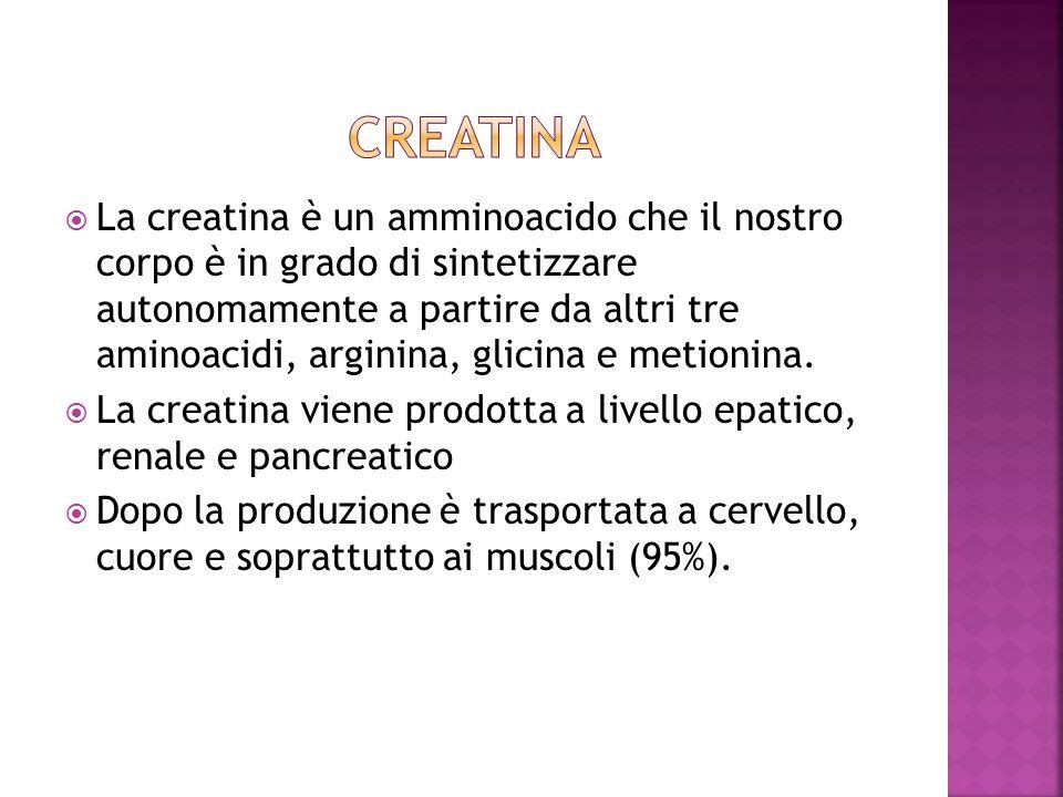 La creatina è un amminoacido che il nostro corpo è in grado di sintetizzare autonomamente a partire da altri tre aminoacidi, arginina, glicina e metio