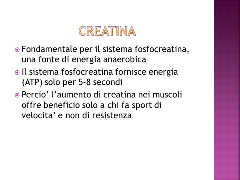 Fondamentale per il sistema fosfocreatina, una fonte di energia anaerobica Il sistema fosfocreatina fornisce energia (ATP) solo per 5-8 secondi Percio