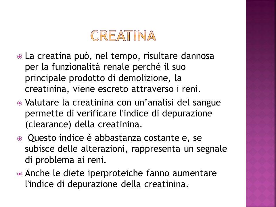La creatina può, nel tempo, risultare dannosa per la funzionalità renale perché il suo principale prodotto di demolizione, la creatinina, viene escret