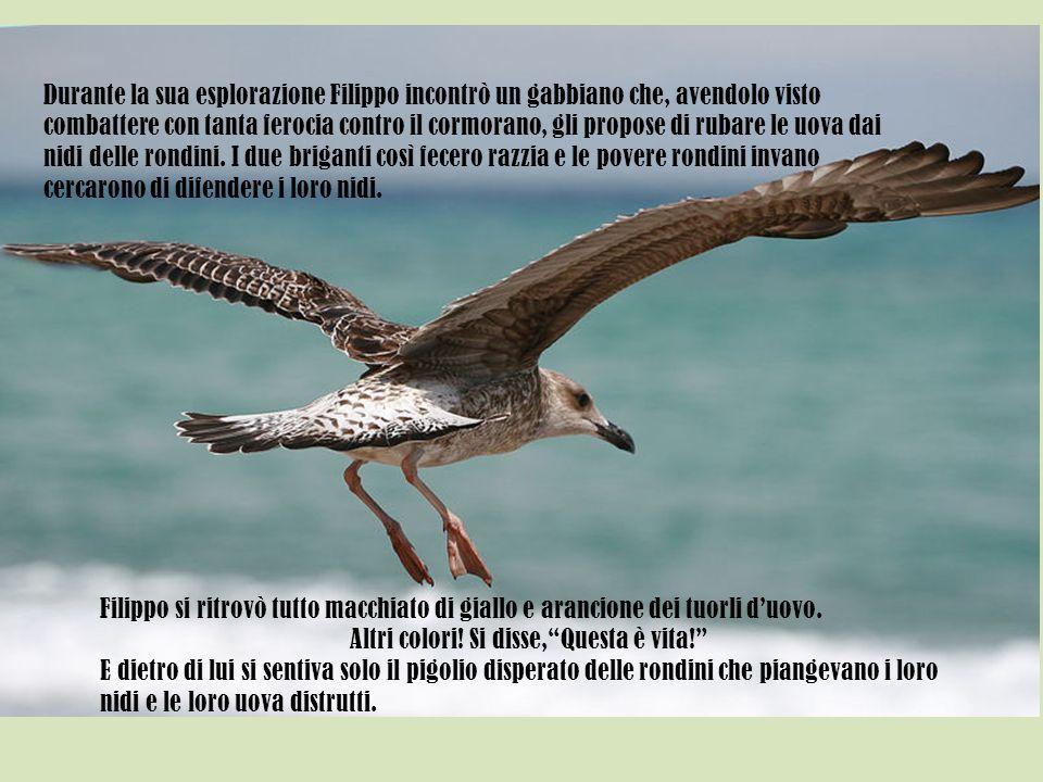 Durante la sua esplorazione Filippo incontrò un gabbiano che, avendolo visto combattere con tanta ferocia contro il cormorano, gli propose di rubare l