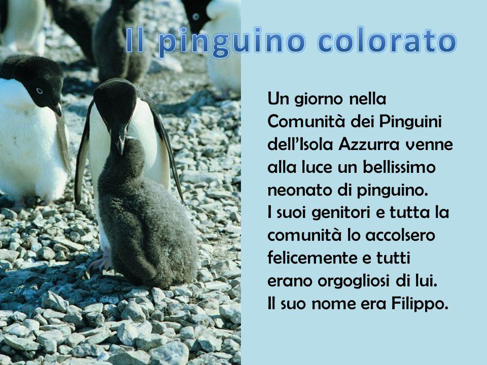 Un giorno nella Comunità dei Pinguini dellIsola Azzurra venne alla luce un bellissimo neonato di pinguino. I suoi genitori e tutta la comunità lo acco