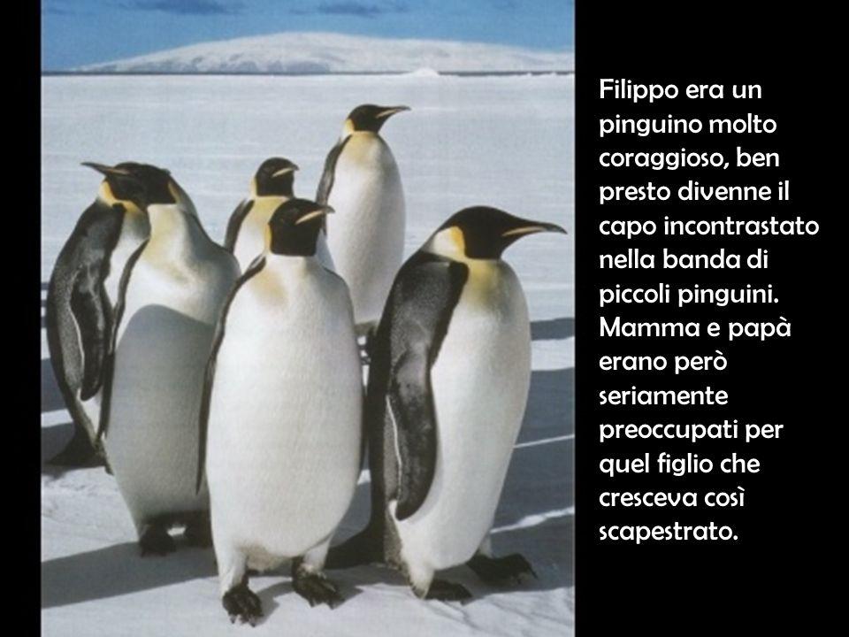 Filippo era un pinguino molto coraggioso, ben presto divenne il capo incontrastato nella banda di piccoli pinguini. Mamma e papà erano però seriamente