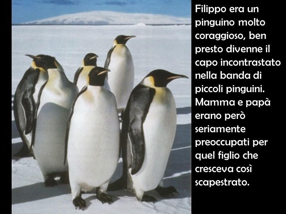 Un giorno il pinguino Filippo osservava annoiato il formicolio dei pinguini della comunità.