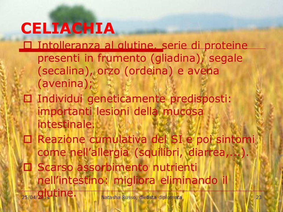 25/04/2014Natasha Russo, dietista diplomata23 CELIACHIA Intolleranza al glutine, serie di proteine presenti in frumento (gliadina), segale (secalina),