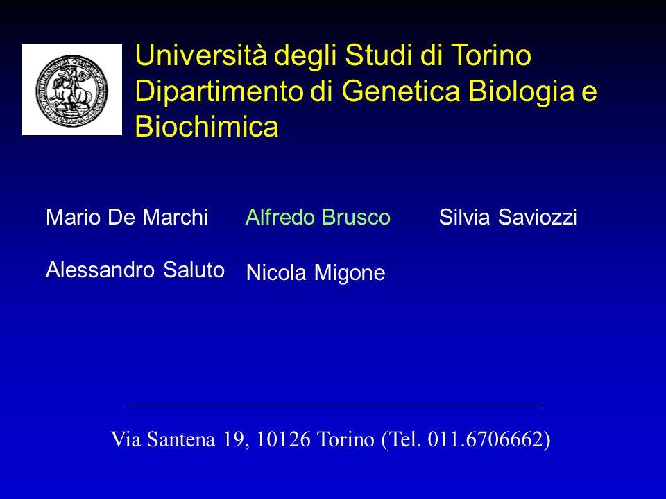 Università degli Studi di Torino Dipartimento di Genetica Biologia e Biochimica Mario De MarchiAlfredo BruscoSilvia Saviozzi Alessandro Saluto Nicola