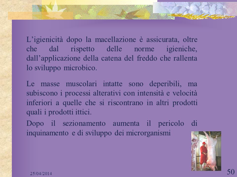 25/04/2014 50 Ligienicità dopo la macellazione è assicurata, oltre che dal rispetto delle norme igieniche, dallapplicazione della catena del freddo ch