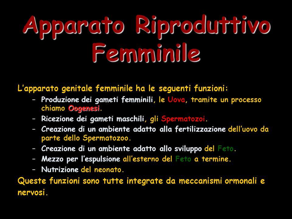Apparato Riproduttivo Femminile Può essere diviso in tre unità strutturali in base alla funzione: Le Ovaie:Le Ovaie: Organi pari posti a lato dellUtero sulle pareti laterali della Cavità Pelvica.