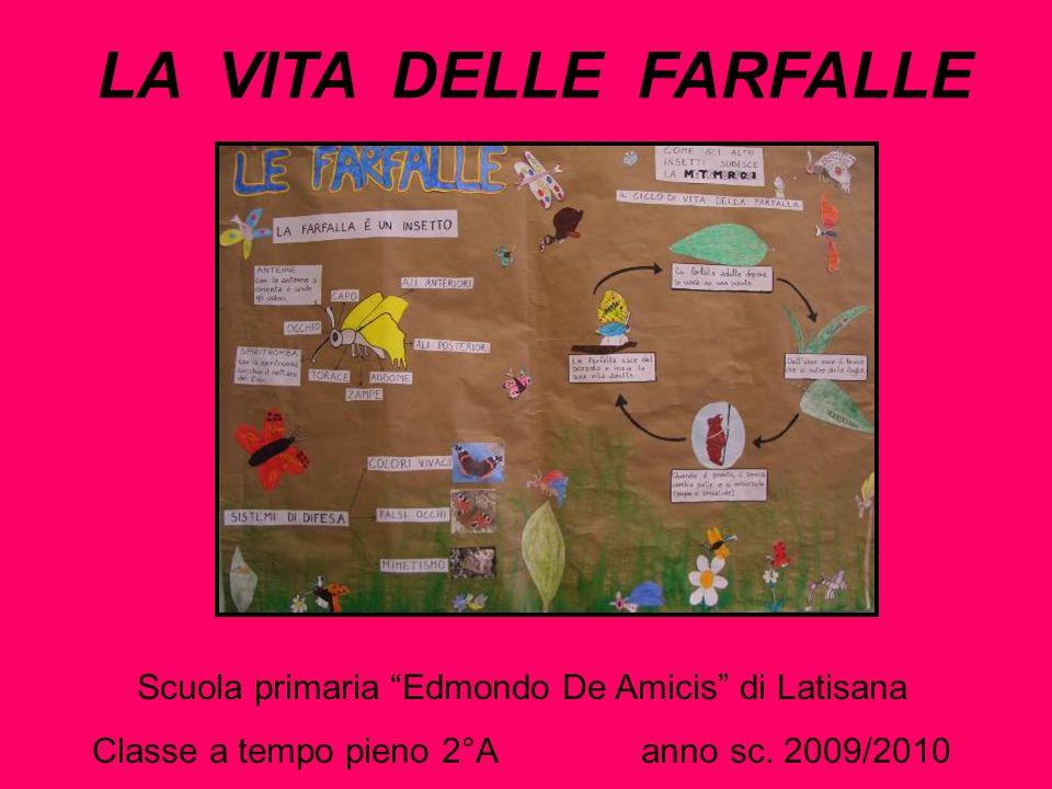 LA VITA DELLE FARFALLE Scuola primaria Edmondo De Amicis di Latisana Classe a tempo pieno 2°A anno sc. 2009/2010