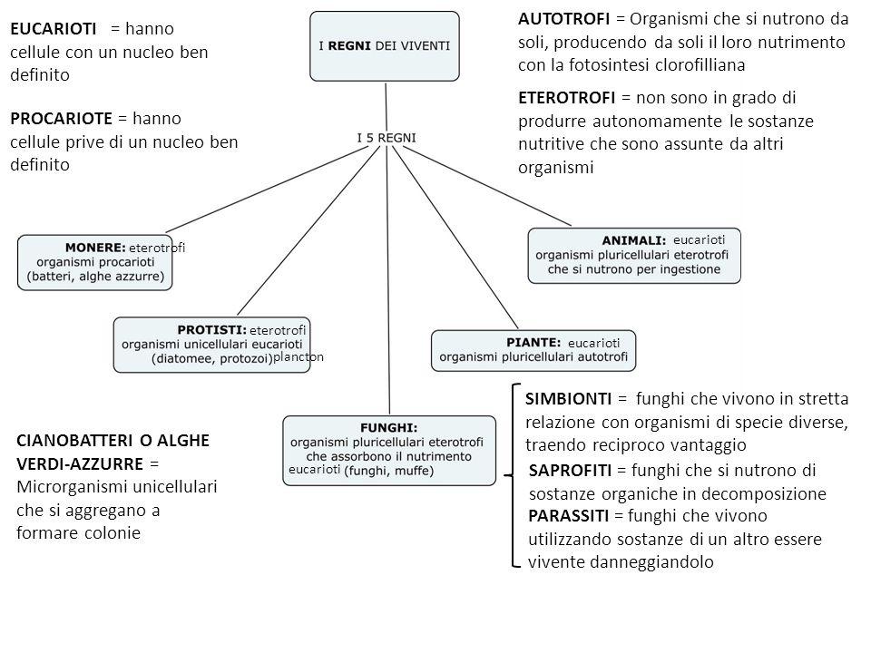 FUNGHI Organismi eucarioti eterotrofi, privi di clorofilla, costituiti dal micelio = intreccio di ife = strutture filamentose MICRORGANISMI Esseri viventi piccolissimi visibili al microscopio Pluricellulari, saprofiti alterano gli alimenti (Penicillium e Aspergillus) anche con micotossine o si usano nella produzione dei formaggi erborinati (Penicillium roqueforti e camemberti) LIEVITI unicellulari di forma tondeggiante, si riproducono per gemmazione Saccaromiceti usati nellindustria alimentare per la fermentazione alcolica (pane, vino e birra).