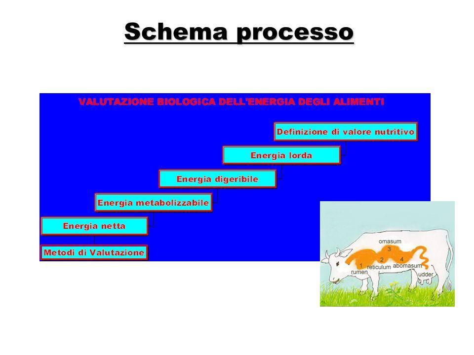 Schema processo