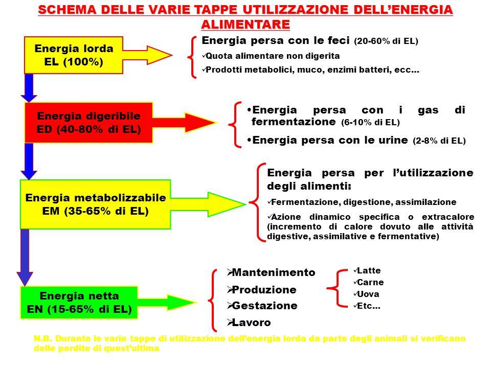 SCHEMA DELLE VARIE TAPPE UTILIZZAZIONE DELLENERGIA ALIMENTARE Energia lorda EL (100%) Energia digeribile ED (40-80% di EL) Energia metabolizzabile EM