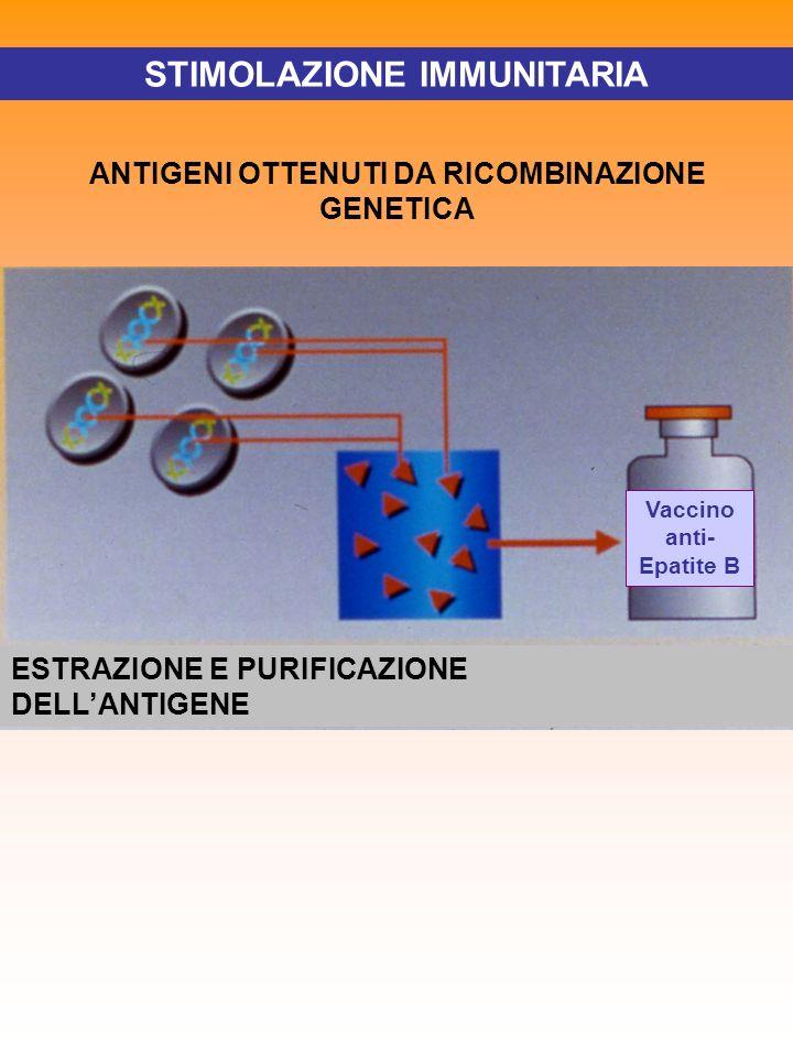 STIMOLAZIONE IMMUNITARIA ANTIGENI OTTENUTI DA RICOMBINAZIONE GENETICA ESTRAZIONE E PURIFICAZIONE DELLANTIGENE Vaccino anti- Epatite B