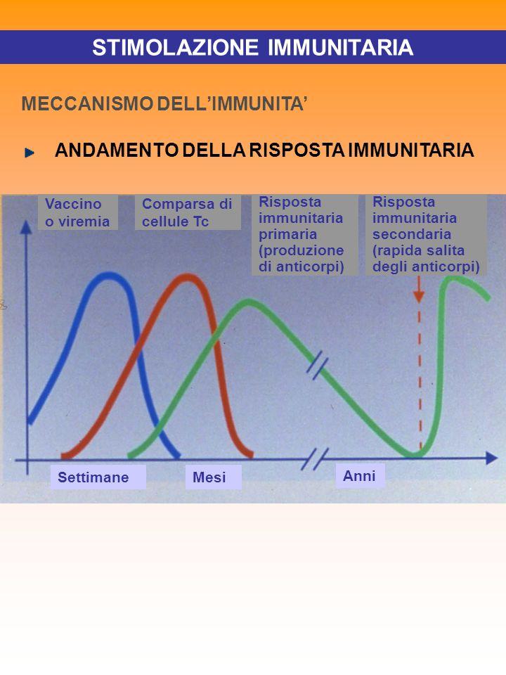 STIMOLAZIONE IMMUNITARIA MECCANISMO DELLIMMUNITA ANDAMENTO DELLA RISPOSTA IMMUNITARIA Vaccino o viremia SettimaneMesi Anni Comparsa di cellule Tc Risp