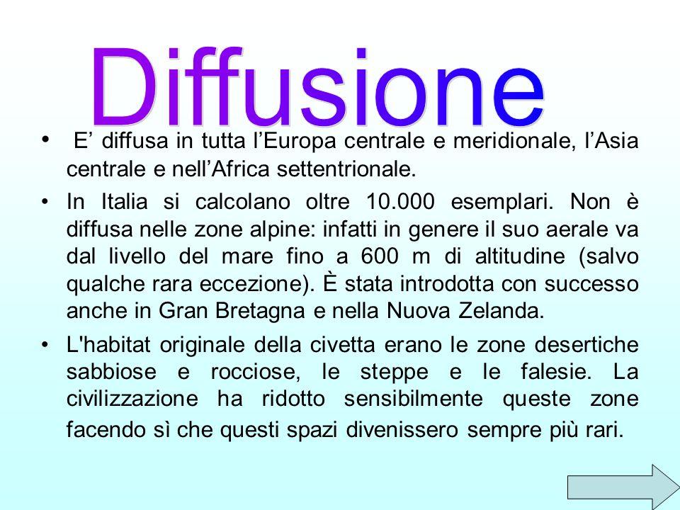 E diffusa in tutta lEuropa centrale e meridionale, lAsia centrale e nellAfrica settentrionale. In Italia si calcolano oltre 10.000 esemplari. Non è di