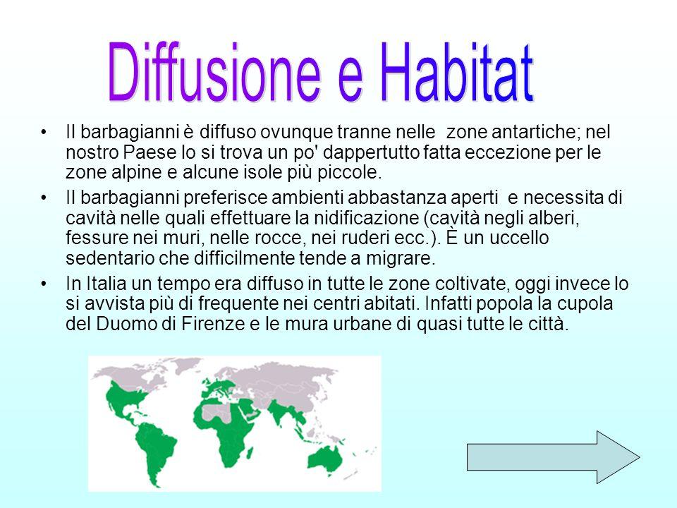 Il barbagianni è diffuso ovunque tranne nelle zone antartiche; nel nostro Paese lo si trova un po' dappertutto fatta eccezione per le zone alpine e al