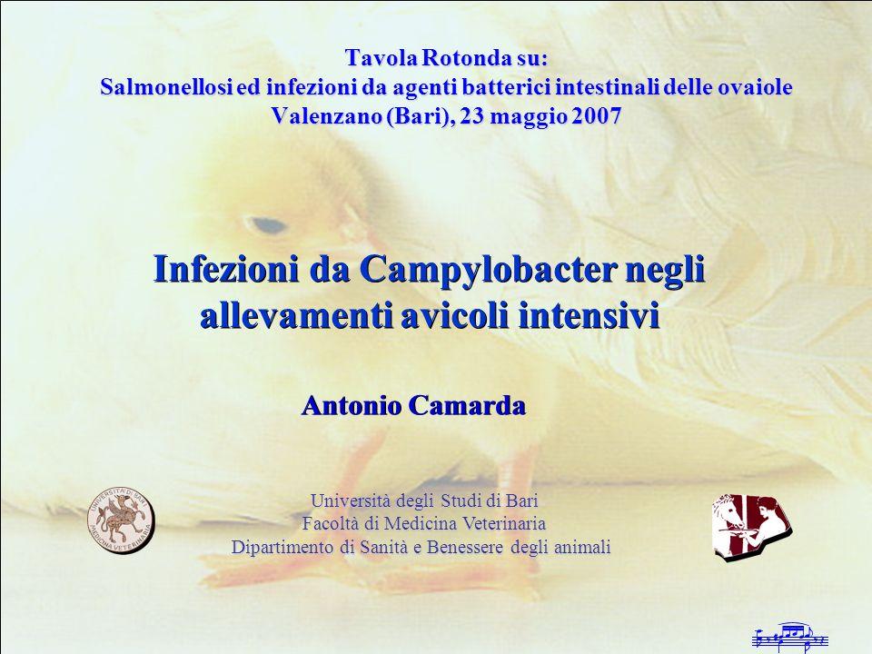 Infezioni da Campylobacter negli allevamenti avicoli intensivi Mosche e scarafaggi 43-%-50% di positività di positività Pulizia della superficie dei campioni Non sono infetti