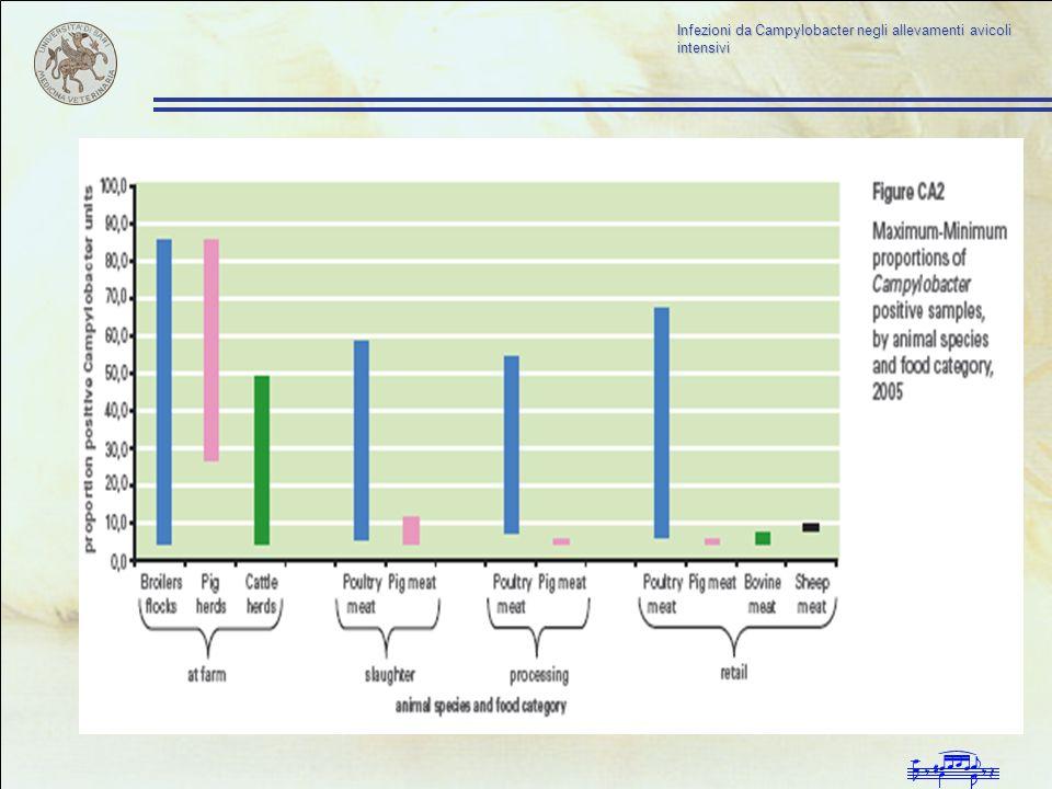 Infezioni da Campylobacter negli allevamenti avicoli intensivi