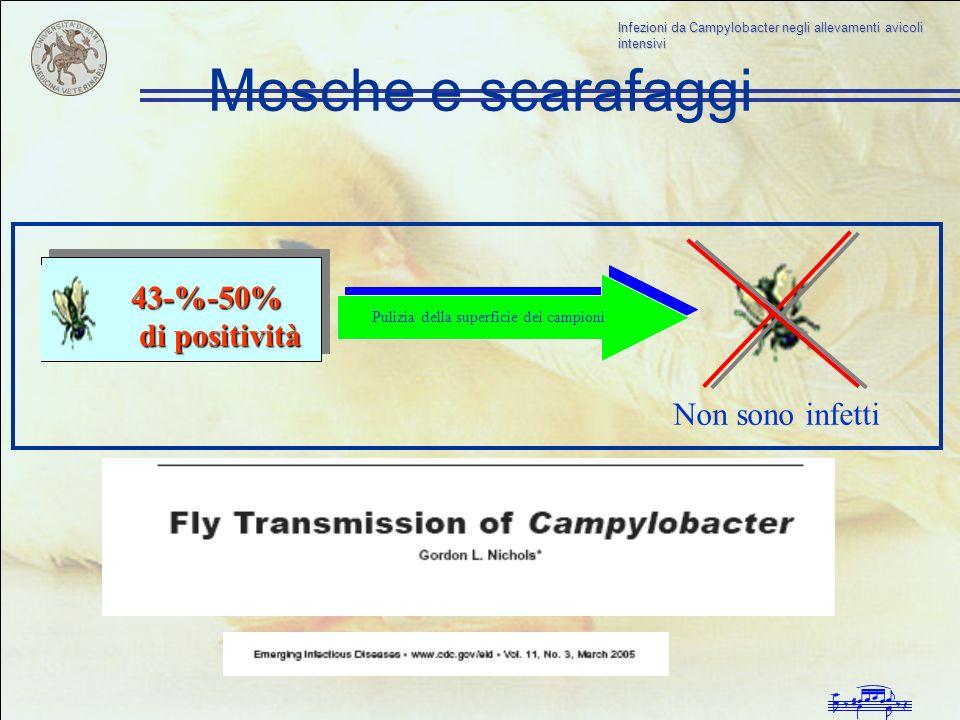 Infezioni da Campylobacter negli allevamenti avicoli intensivi Mosche e scarafaggi 43-%-50% di positività di positività Pulizia della superficie dei c